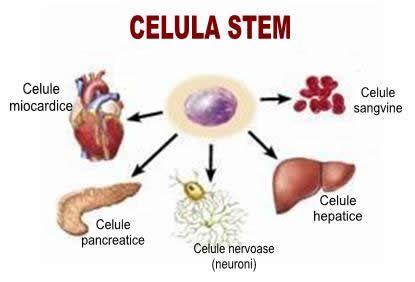 celule stem pluripotente