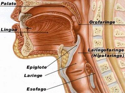 laringele