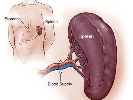 cancer splina simptome)