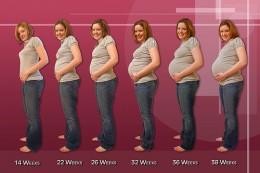 evolutie sarcina